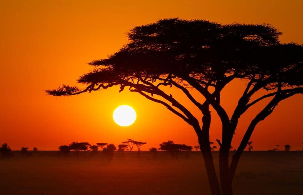 Bandeau-Afrique_img1000x645