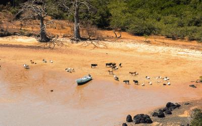 Rencontre avec la faune exceptionnelle de l'archipel des Bijagos