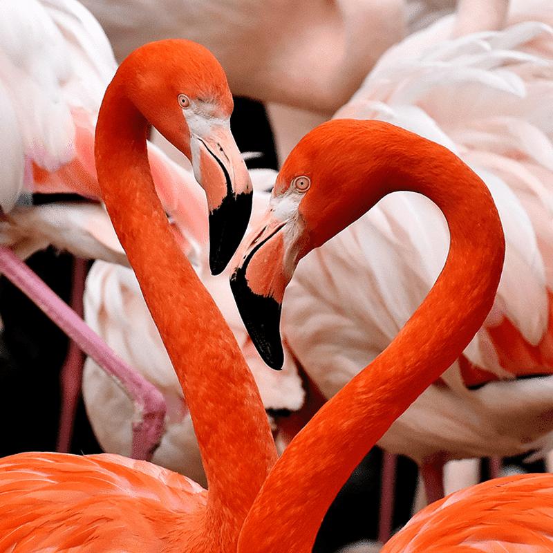 Flamingo-header