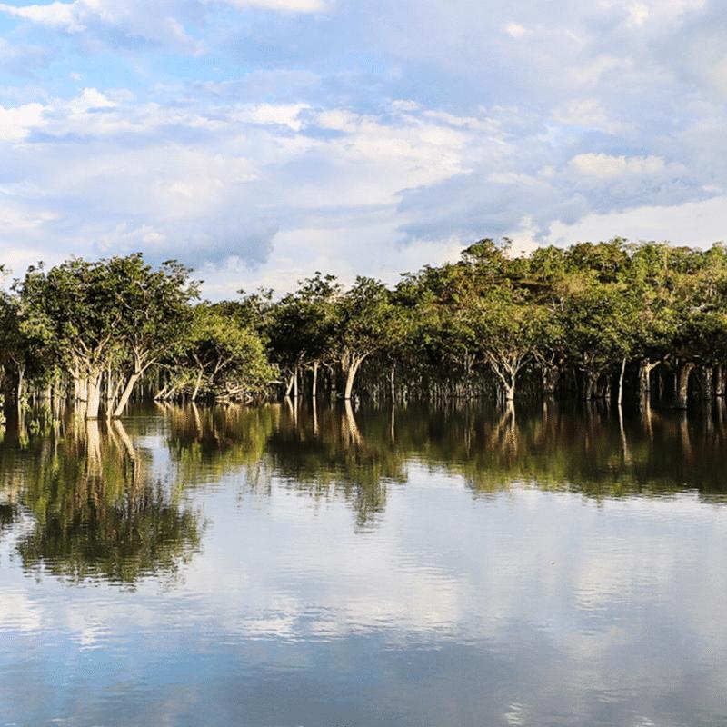 Forêt-Inondée_Brésil-header