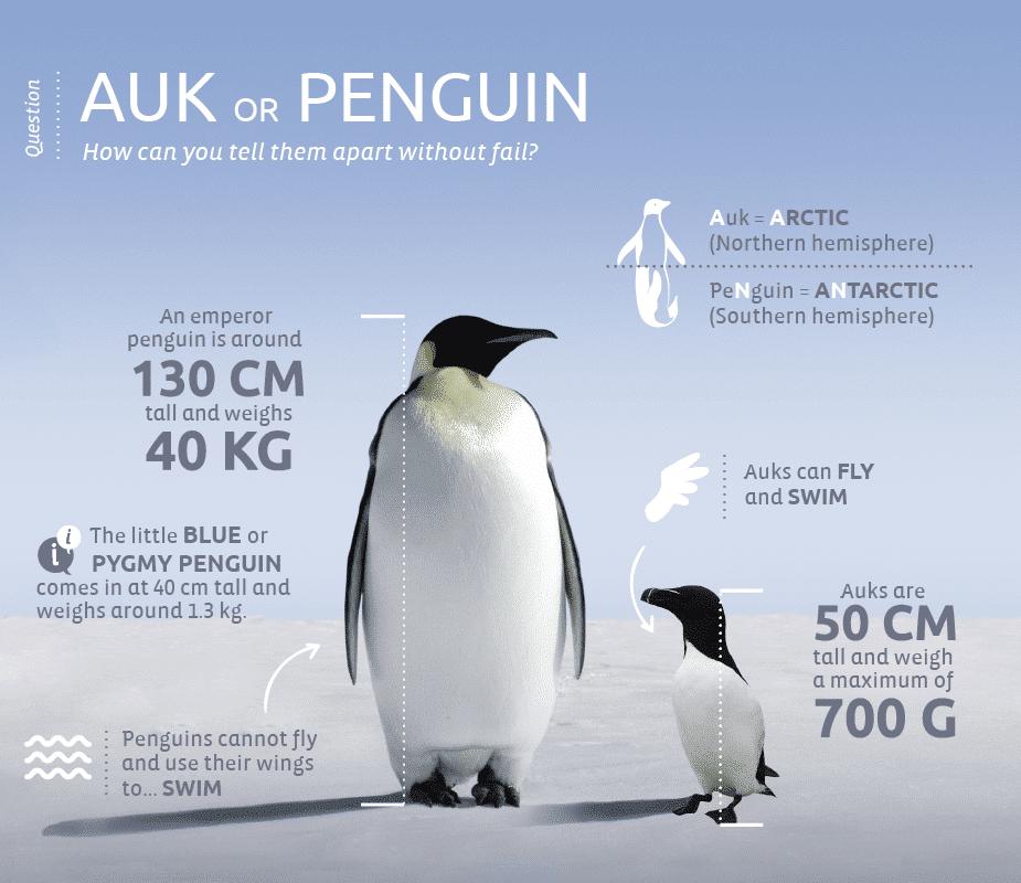 Pingouins-vs-manchot-EN-V2-01
