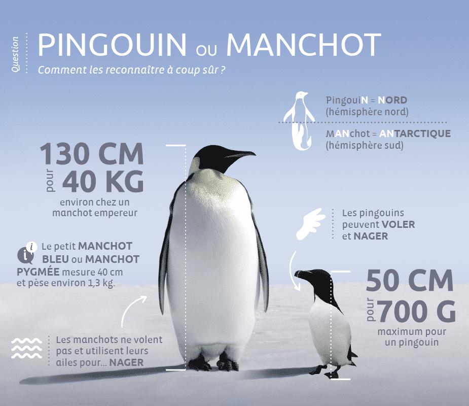 Pingouins-vs-manchot-V3