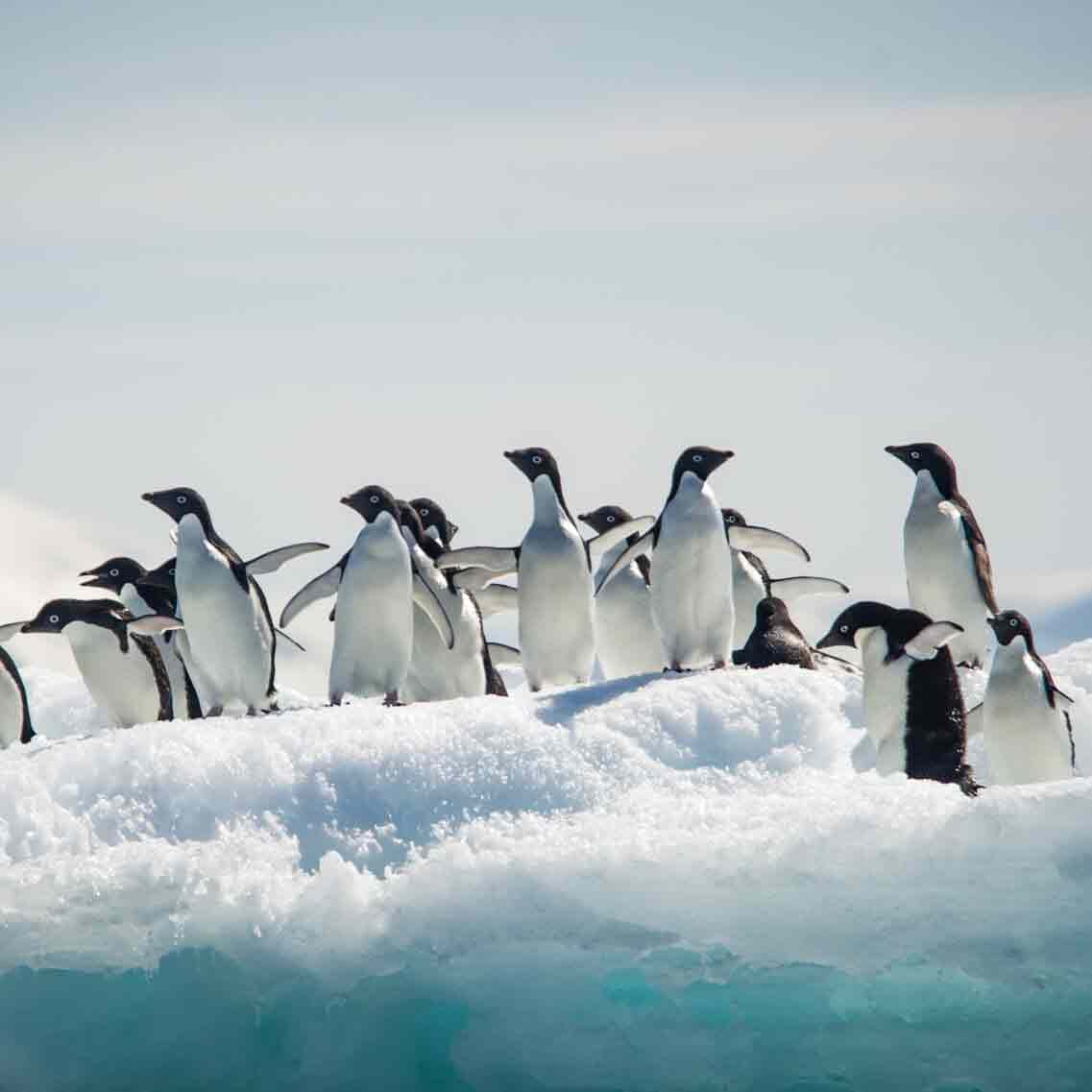antarctique-croisiere-ponant
