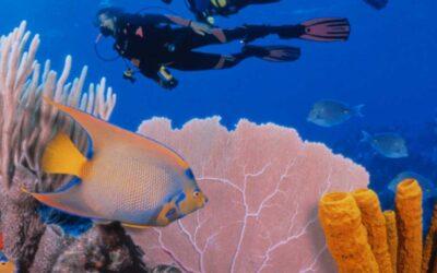Tout savoir sur la barrière de corail du Belize