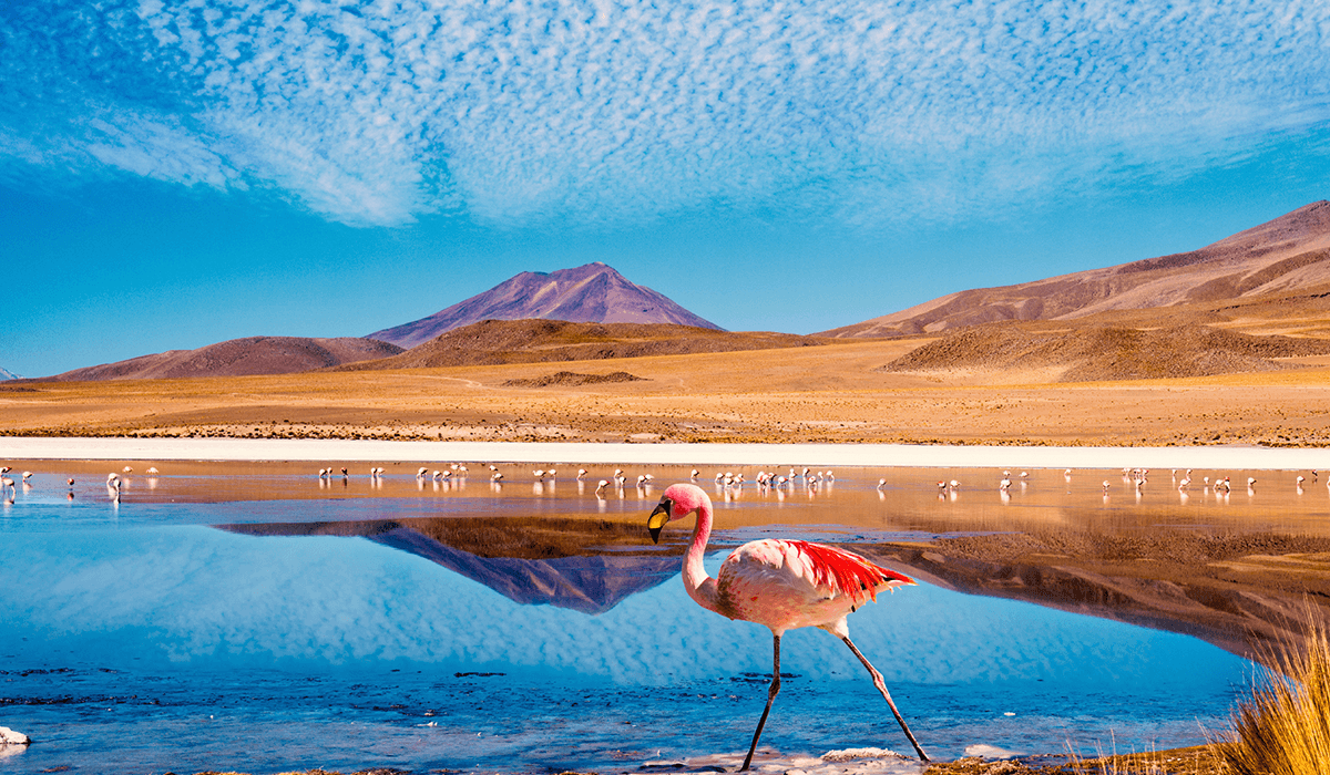 flamingo-bolivia-1200×700-compressor-1