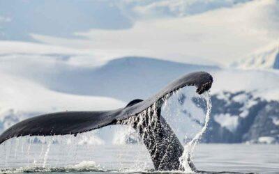 Le marathon de la baleine