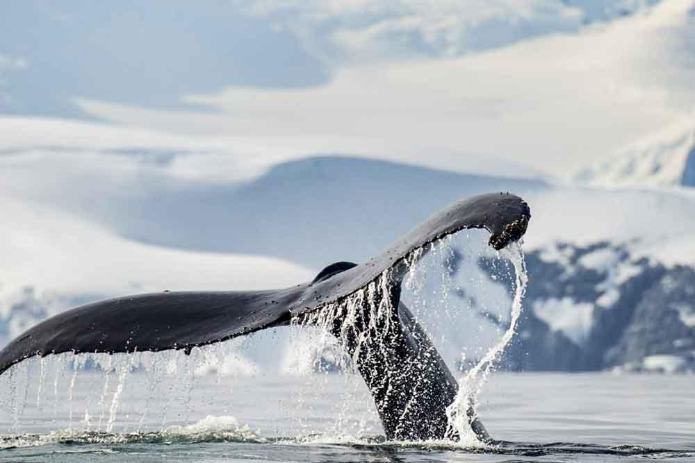 marathon-de-baleine