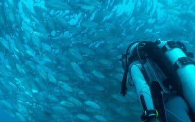 Trésors cachés et merveilles animales : les meilleurs spots de plongée
