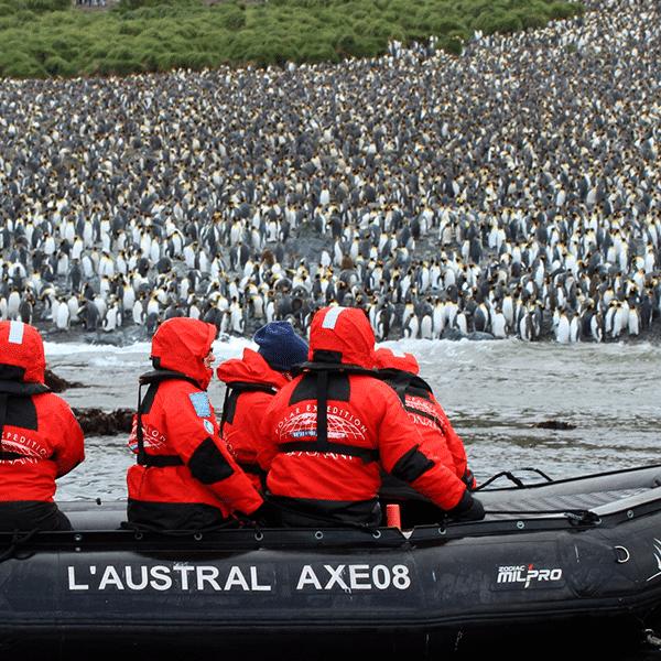 zodiac-penguins-push-600×600-compressor