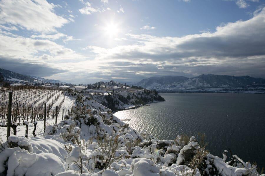Winter Vineyard Okanagan Valley