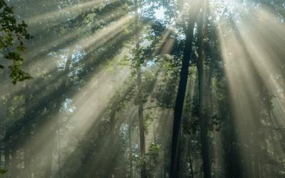 Top 5 des plus belles forêts primaires du monde