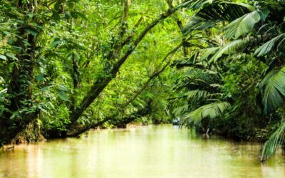 Ponant Discovery : récit d'un voyage de repérage en Guyane