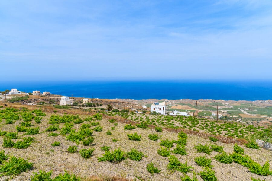 A view of vineyards with blue sea in background on Santorini island, Greece