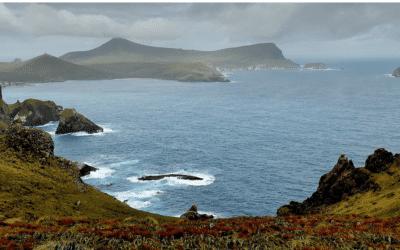 À la découverte des trésors naturels des îles subantarctiques