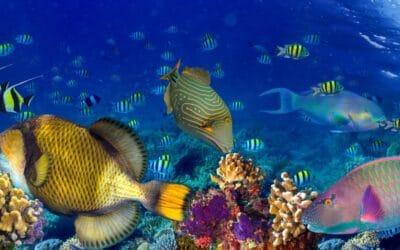 Fascinants mondes marins des Caraïbes