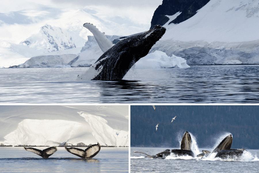 observer-baleine-3