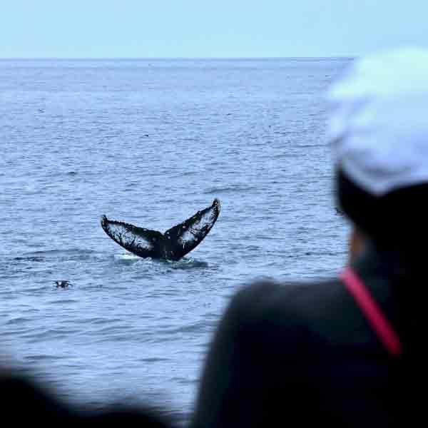 ou-observer-baleines