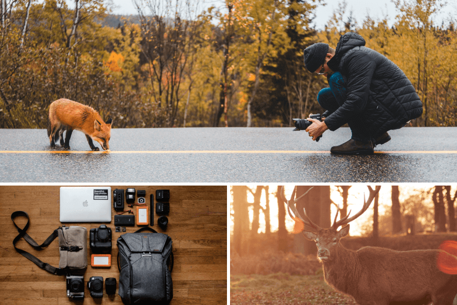 photographier-animaux-en-voyage