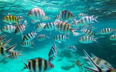 Fascinants mondes marins des Seychelles