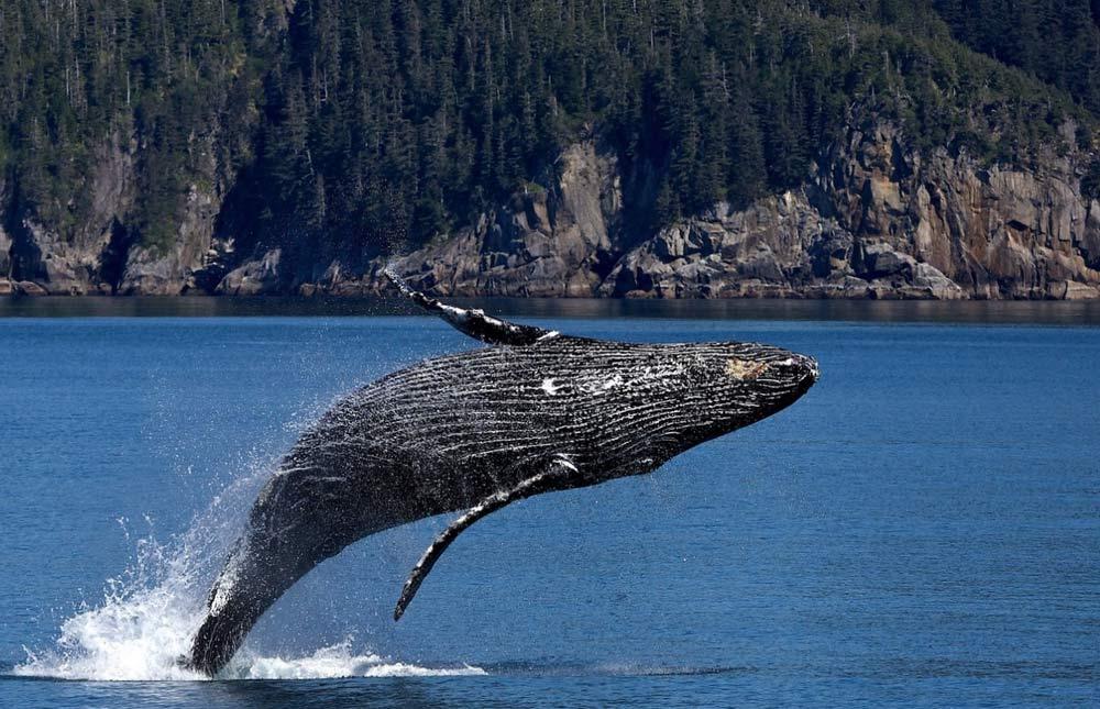 une-baleine