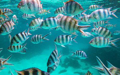 Fascinating marine worlds of the Seychelles