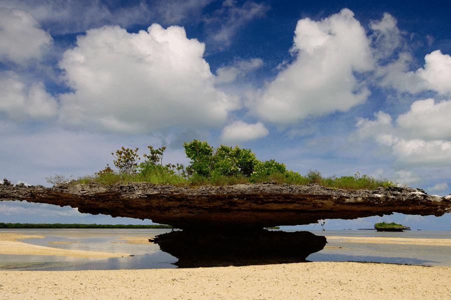 aldabra-900×600