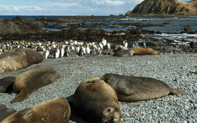 Expedition Story in the Heart of the Subantarctic Islands of Australia & New Zealand