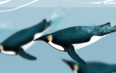 Rencontre avec la sentinelle de l'Antarctique : le manchot empereur