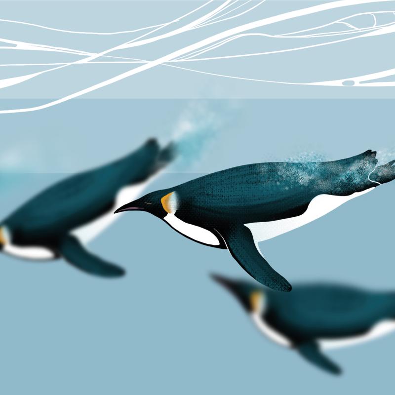 Illustration de manchots nageant sous l'eau