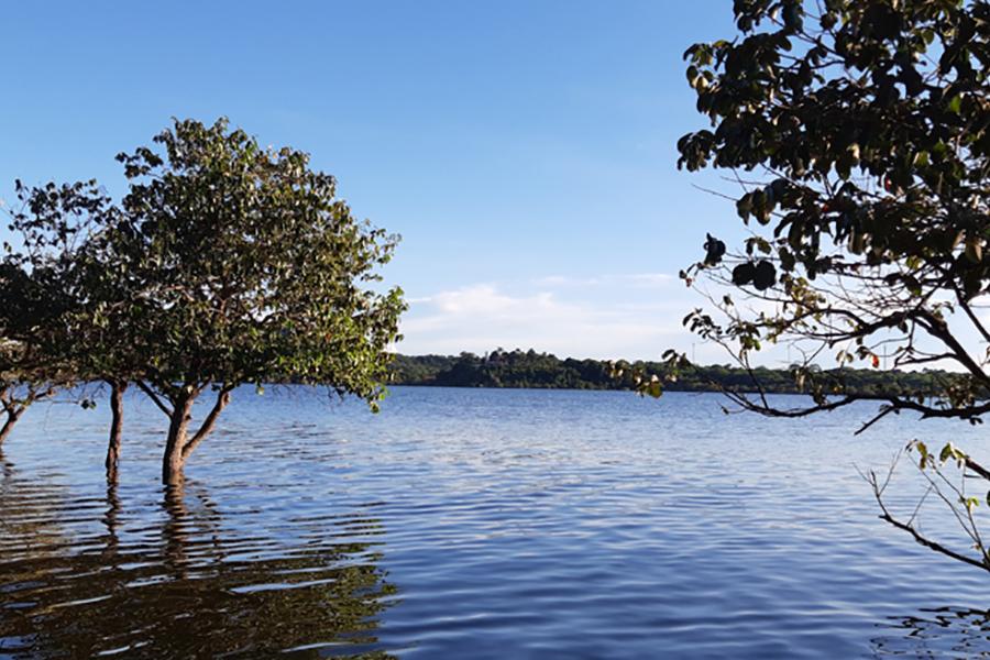 ile europa arbres lac
