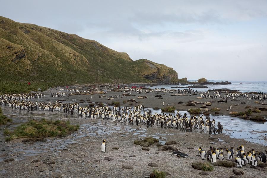 iles-subantarctiques