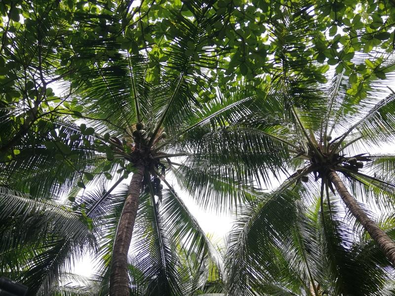 jungle ile glorieuse
