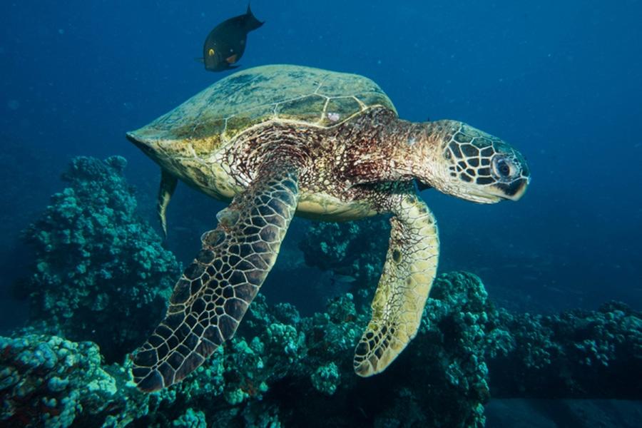 tortue fernando