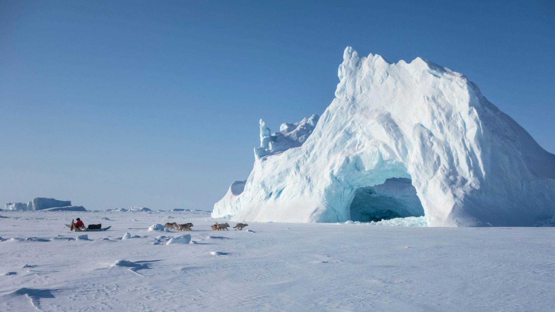 Chiens de Traîneau en milieu polaire
